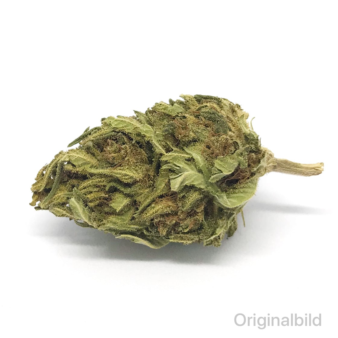 mountain-bud